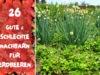 Erdbeeren-Mischkultur