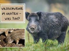 Wildschweine im Garten vertreiben