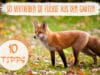 Fuchs aus dem Garten vertreiben
