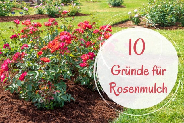 Rosenmulch