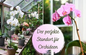 Standort Orchideen