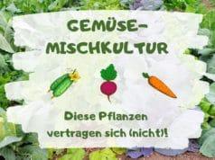 Gemüse-Mischkultur