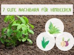 Himbeeren-Mischkultur