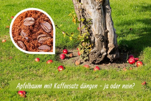 Apfelbaum düngen