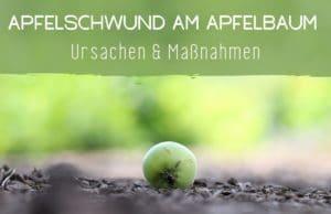 Apfelbaum verliert Äpfel