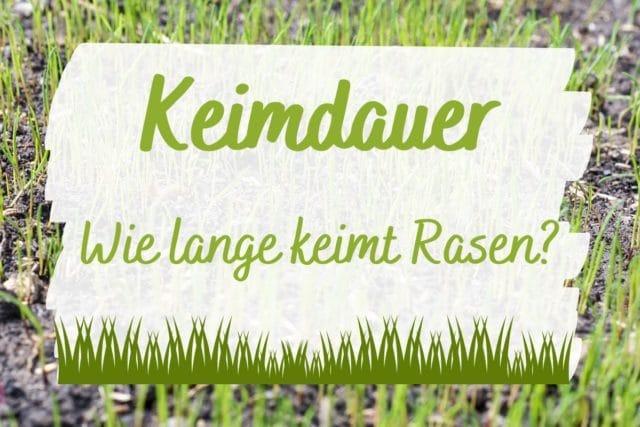 Keimdauer Rasen