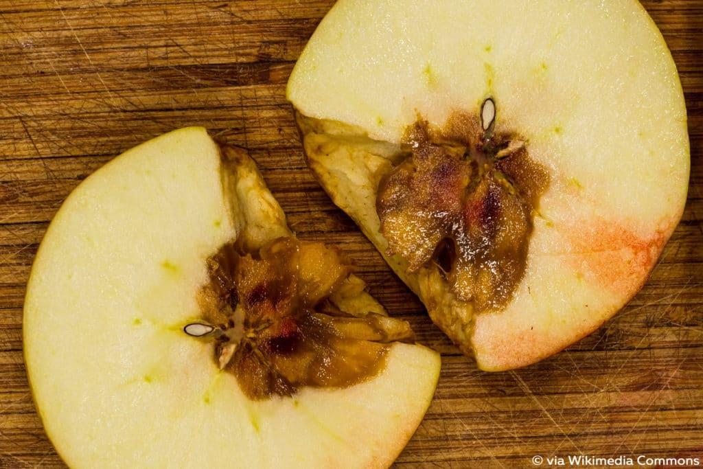 Kernhausfäule, Apfelbaum