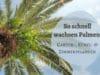 Palmenwachstum