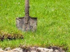 Bodenprobe Rasen
