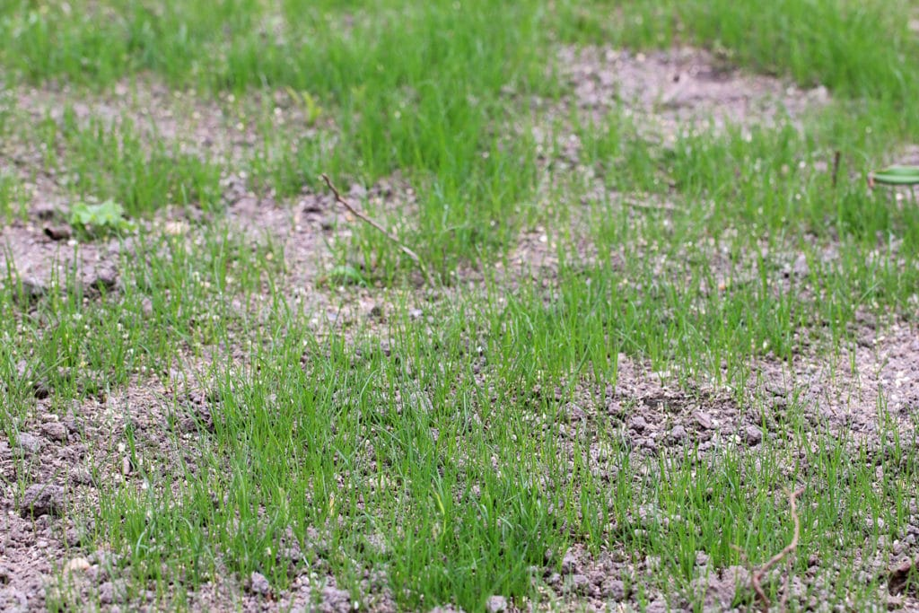Kahle Stellen im Rasen