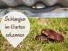 Schlangen im Garten