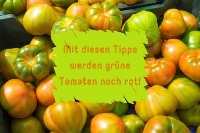Tomaten nachreifen