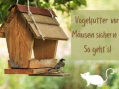Vogelfutter vor Mäusen sichern