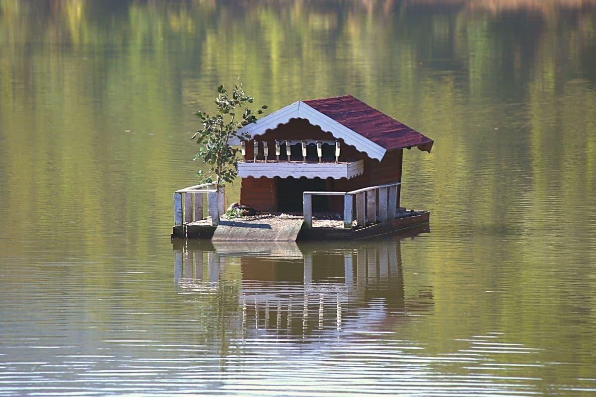 Vogelhaus Wassergraben