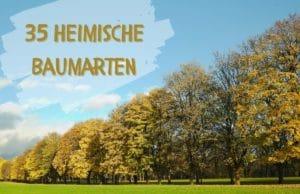 Baumarten-Deutschland