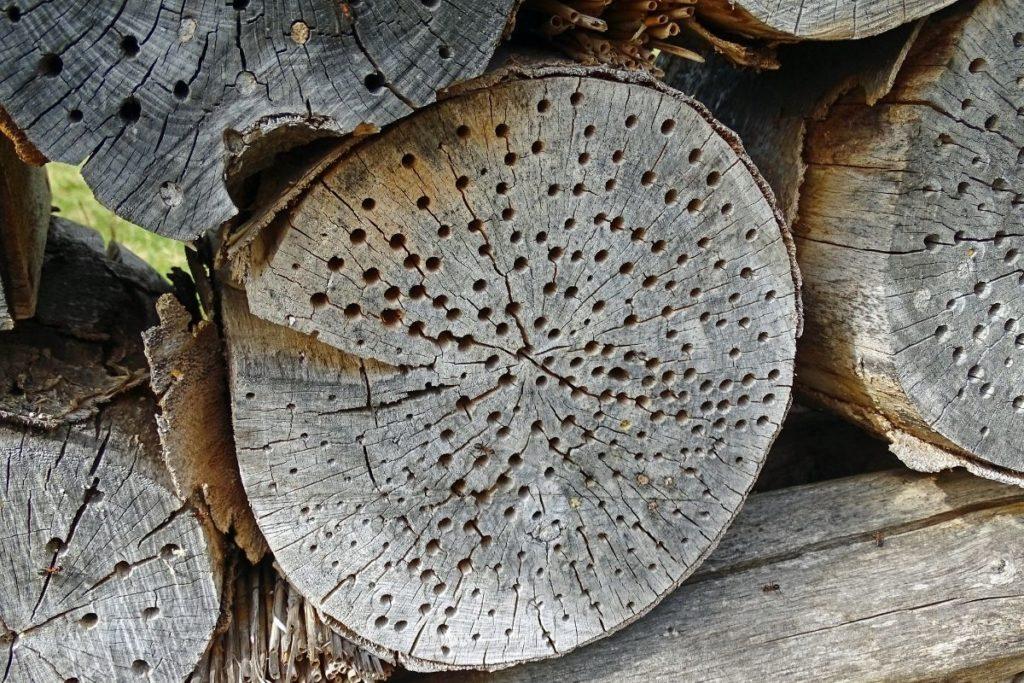 Baumstumpf Insektenhotel
