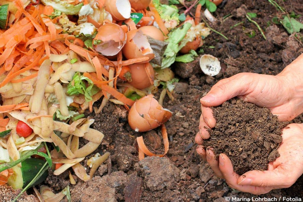 Eierschalen Kompost