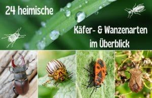 Käfer- und Wanzenarten