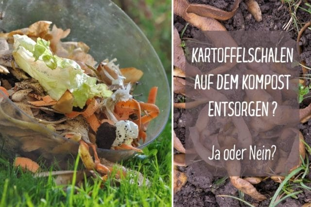 Kartoffelschalen auf dem Kompost entsorgen