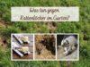 Rattenlöcher im Garten