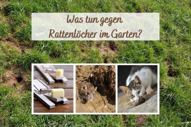 Rattengift Selbst Herstellen