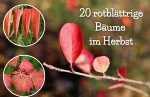 rote Blätter im Herbst