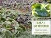 Salat im Winter