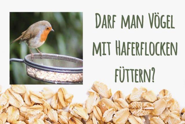Vögel füttern mit Haferflocken
