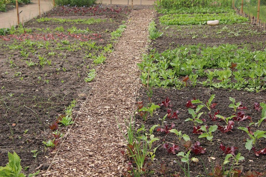 Gemüsegarten, Mischkultur, Projekt-Ideen