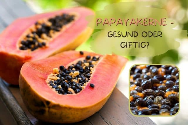 Papayakerne gesund oder giftig