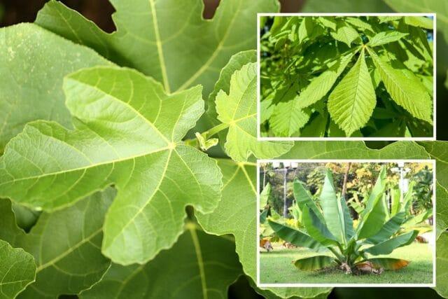 Bäume große Blätter