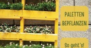 Blumenwand bepflanzen