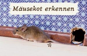 Mäusekot erkennen