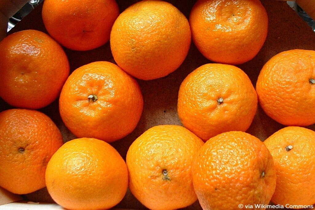 Citrus × clementina