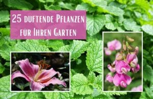 Duftende Pflanzen
