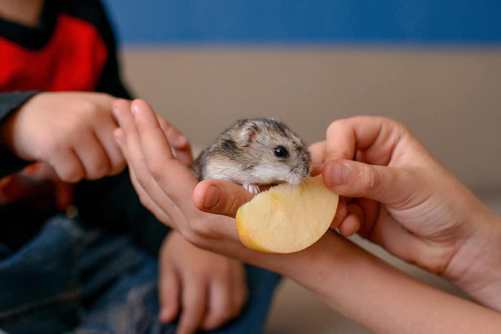 Hamster ist Apfel