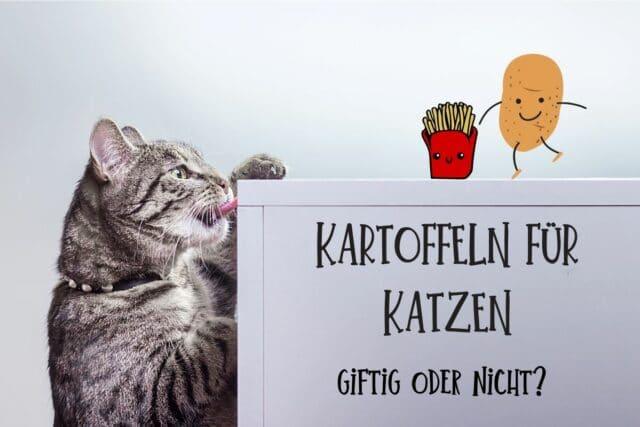 Kartoffeln für Katzen