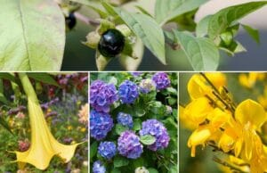 psychoaktive Pflanzen