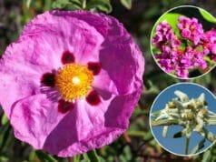 Winterharte Pflanzen Sonne