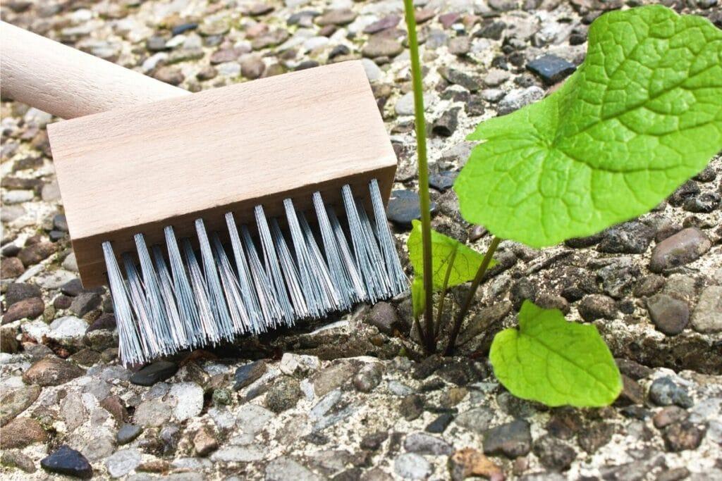 Unkraut von Steinen entfernen - Drahtbürste