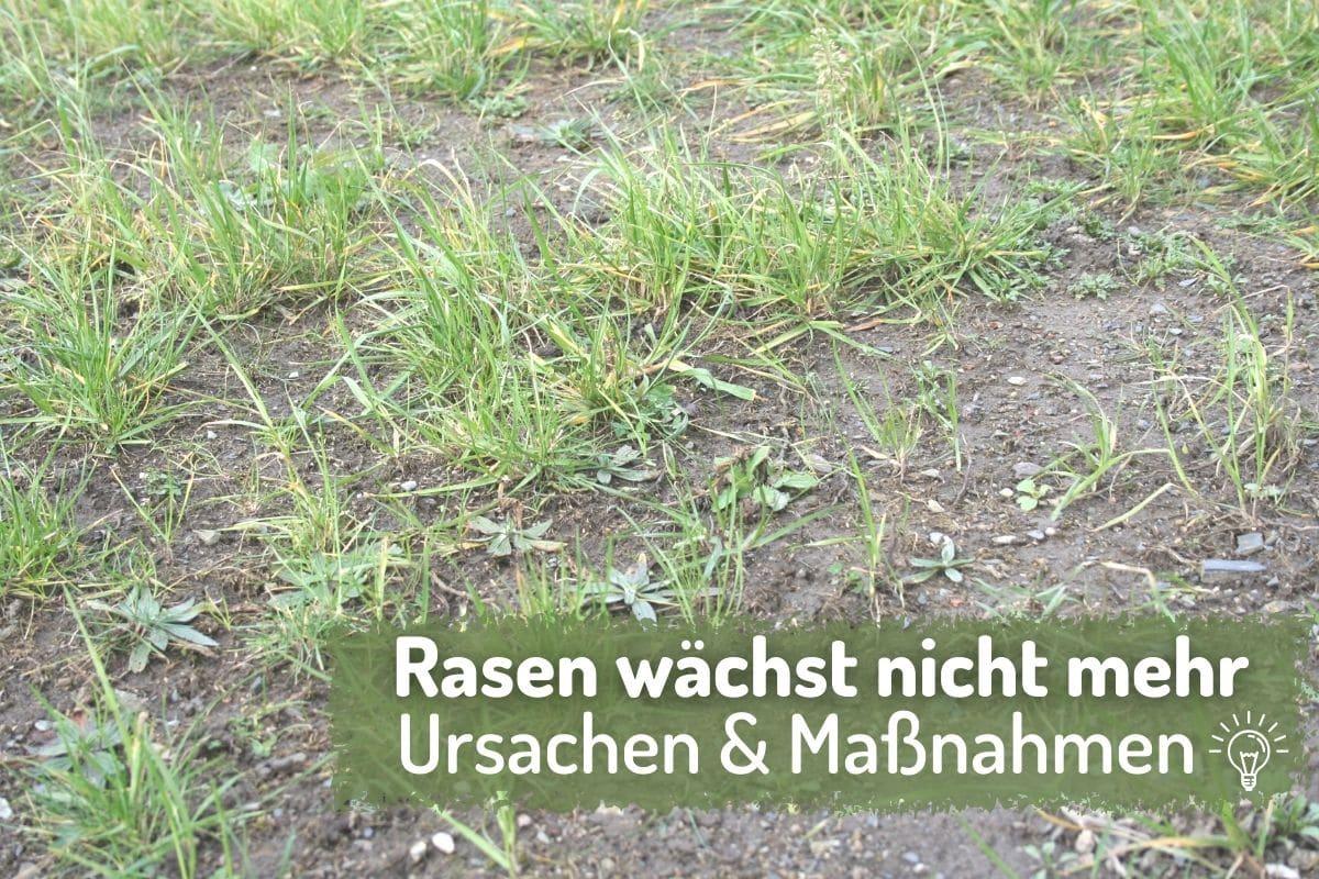 Rasen wächst nicht: trockener/harter Boden - Gartendialog.de