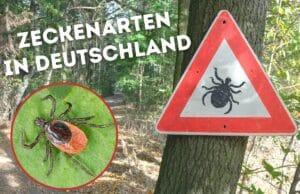 Zeckenarten in Deutschland