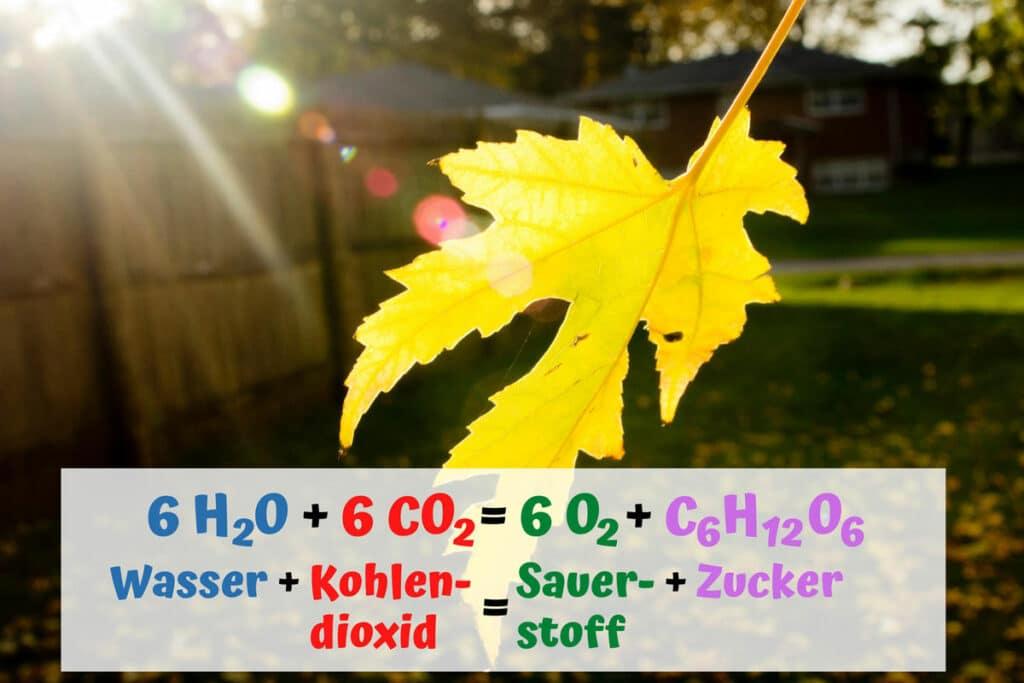 Formel der Fotosynthese