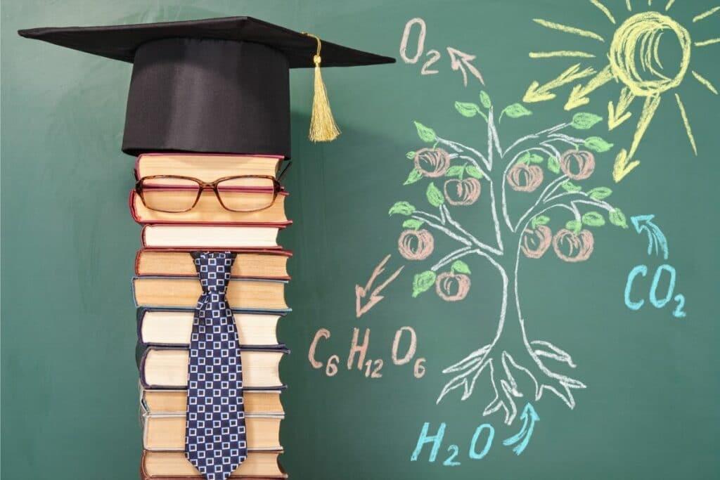 Tafelbild zur Fotosynthese