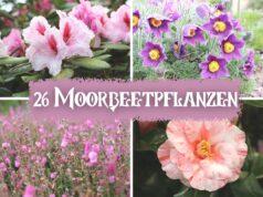 Moorbeetpflanzen