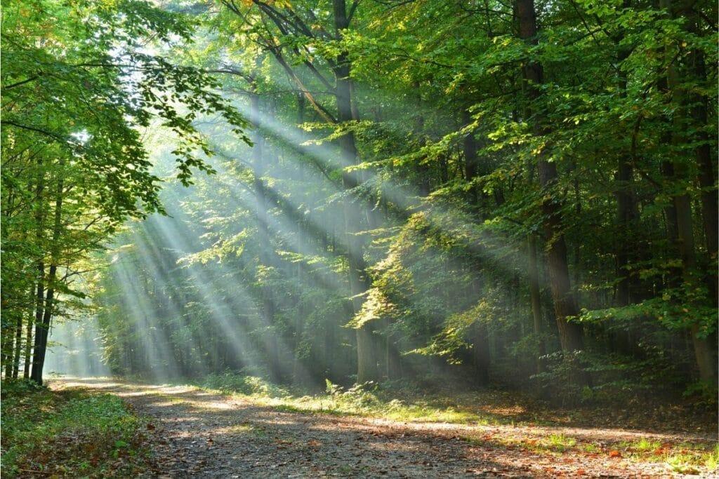 Sonnenlicht fällt in Wald ein