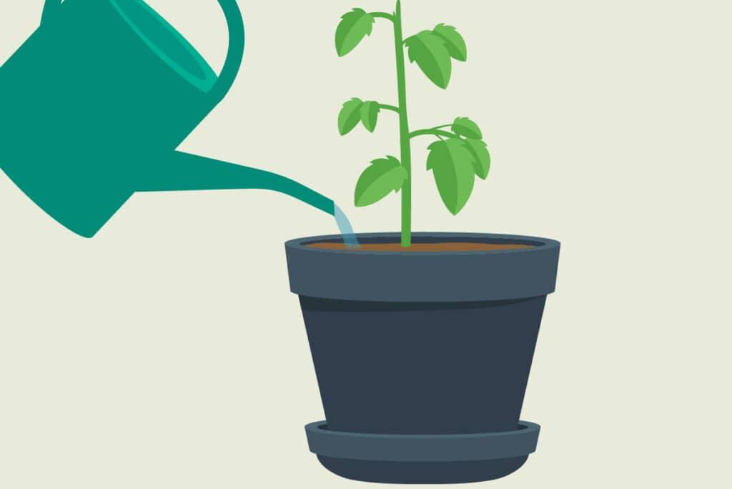 Pflanzen gießen - Gießwasser abfließen lassen