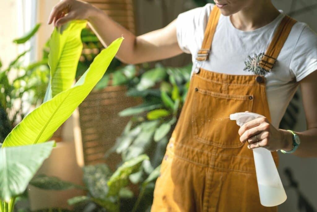 Bananenpflanze abduschen