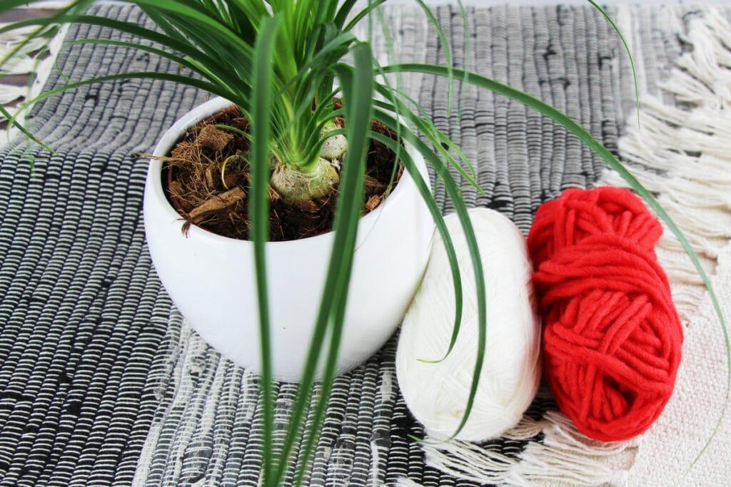 Wollknäuel mit Zimmerpflanzen