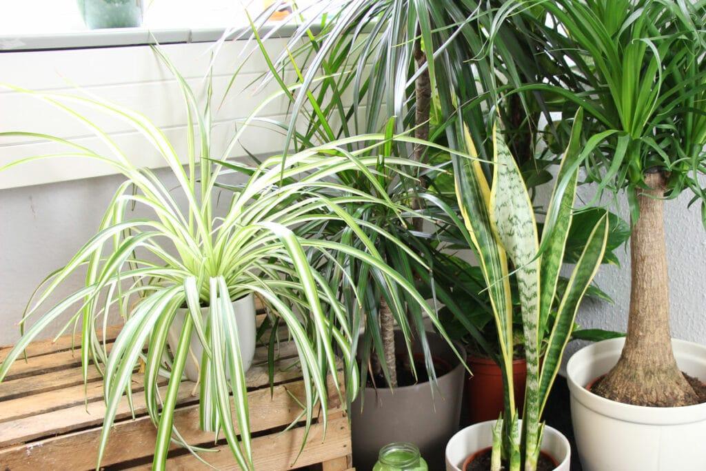 Zimmerpflanzen zusammenstellen